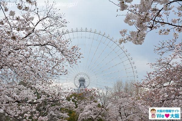 万博記念公園 観覧車 桜