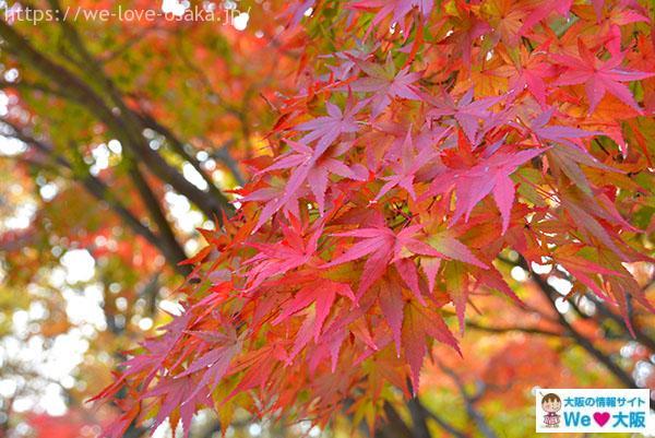 万博公園 紅葉