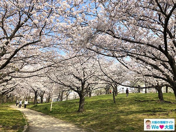毛馬桜之宮公園 桜