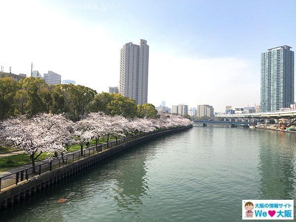 毛馬桜之宮公園 桜②