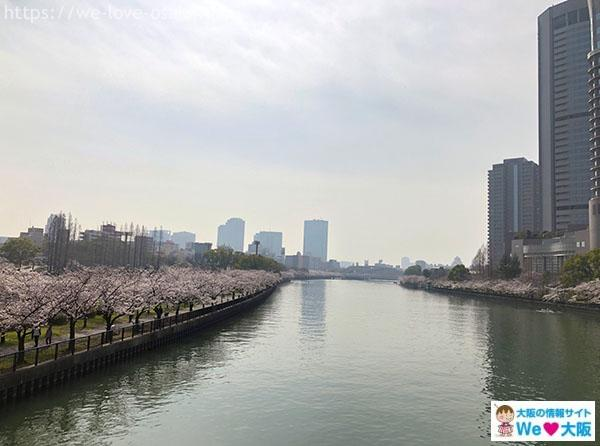 毛馬桜之宮公園 桜③