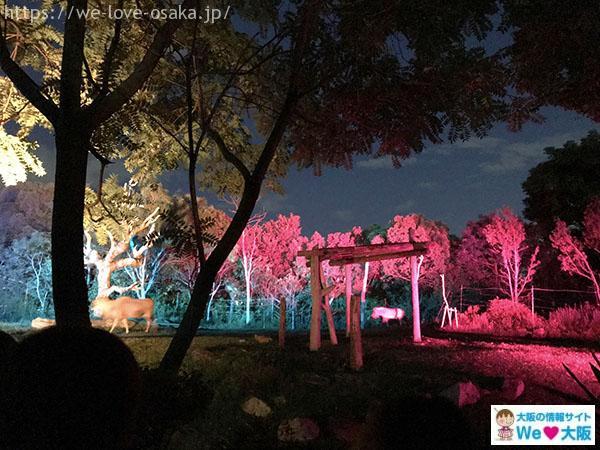 天王寺動物園 ナイトズー サファリゾーン