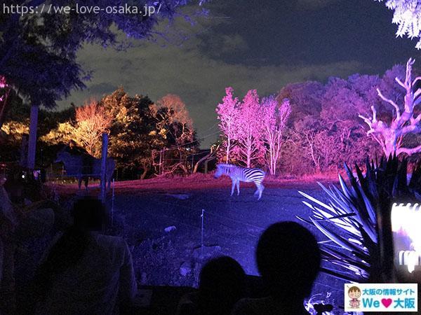 天王寺動物園 ナイトズー シマウマ