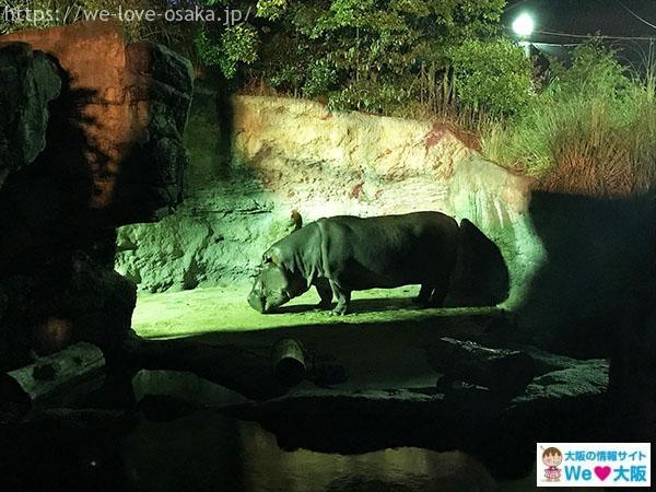 天王寺動物園 ナイトズー カバ