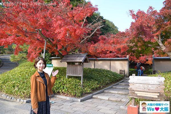 日本庭園③
