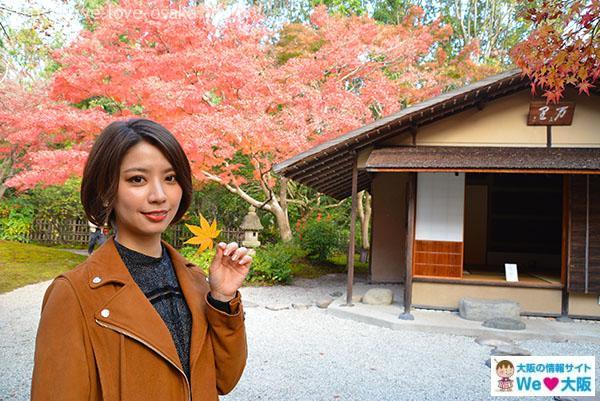 日本庭園④