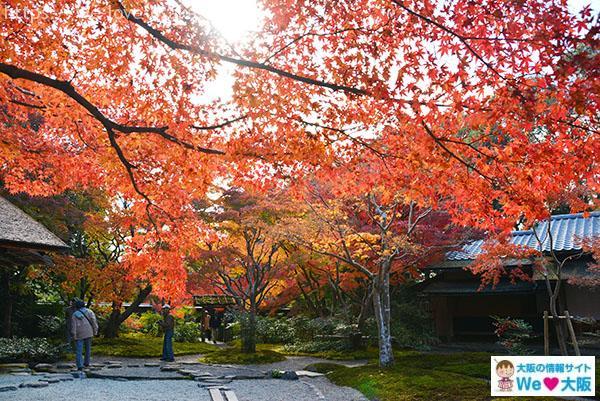 日本庭園⑤