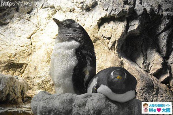 南極大陸 ペンギン