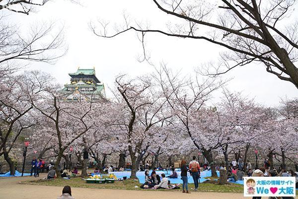 西の丸公園 桜