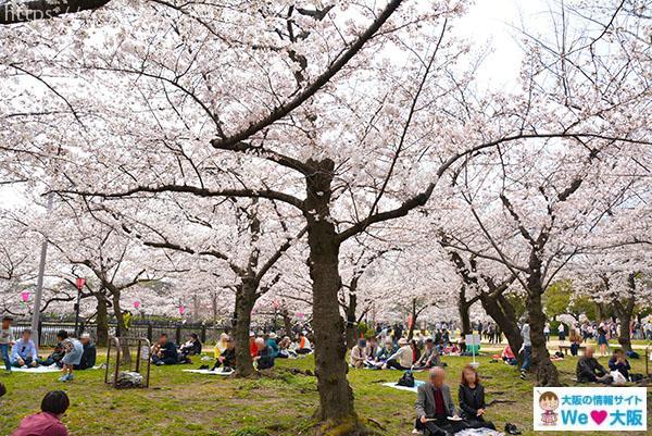 大阪城 桜③