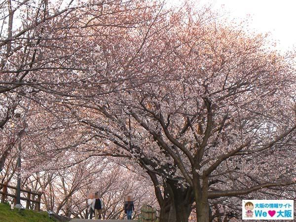 打上川治水緑地公園