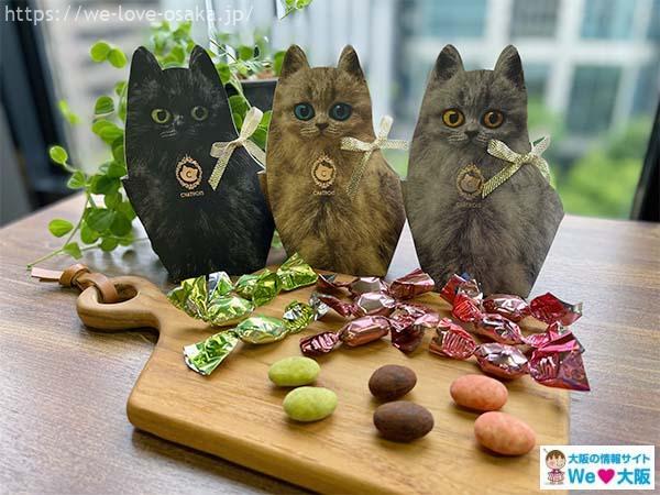 キトン猫チョコ