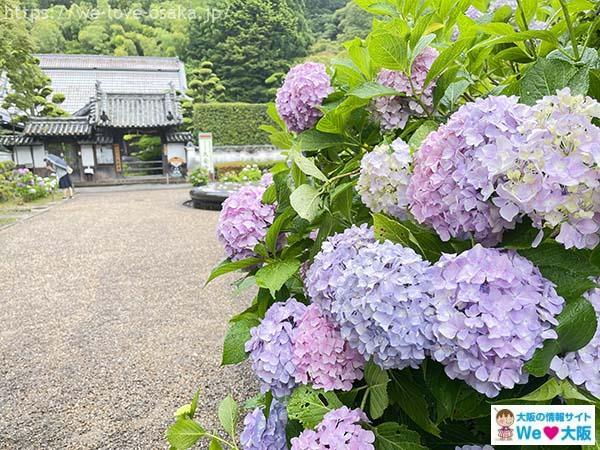大阪ソロ活久安寺