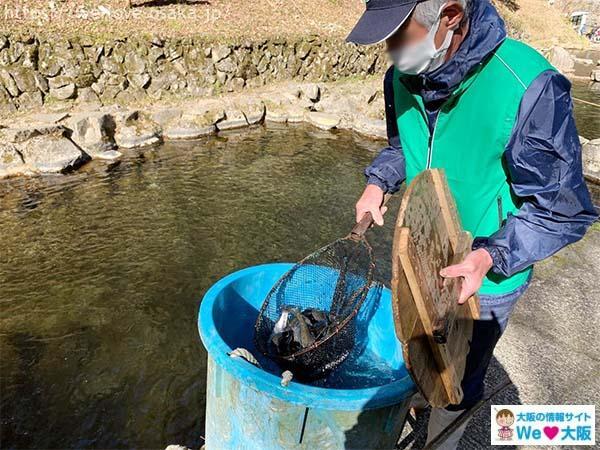 千早川マス釣り場ニジマス釣り02