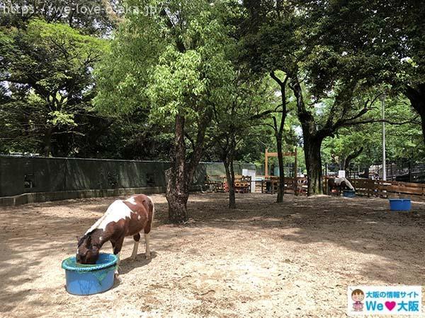五月山動物園馬