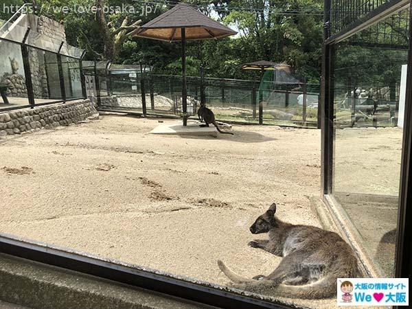五月山動物園ワラビー